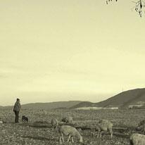 《蒙福教會》第十四章 真牧羊人的呼召